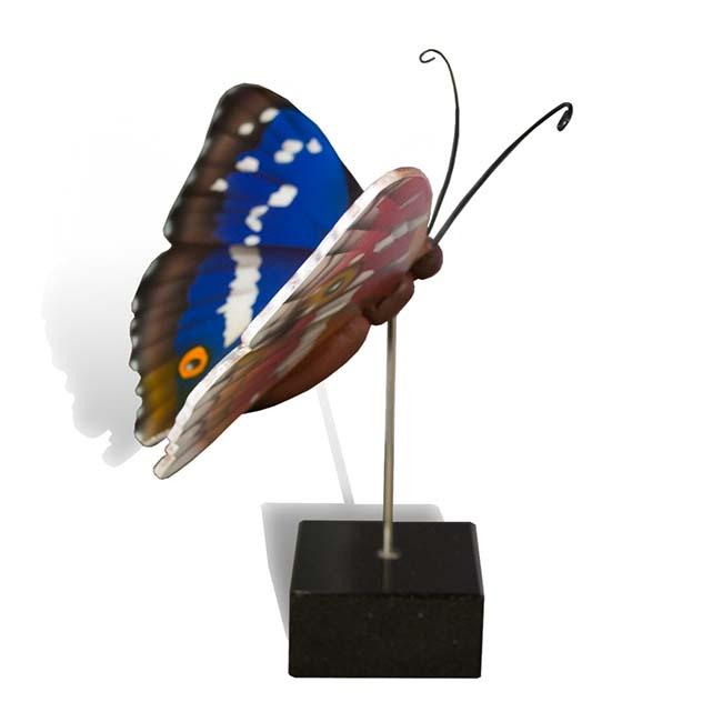 Großer Hölzerner Eschenschmetterling Leuchten (0,003 Liter) Hölzerne Schmetterlinge für Asche